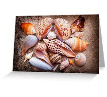 Seashells of Sanibel Island Greeting Card