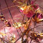 roses by MardiGCalero