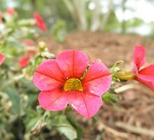 Pretty Red Flower by ack1128