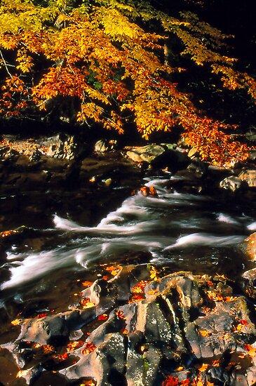 AUTUMN,LITTLE RIVER by Chuck Wickham