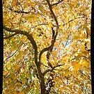 Autumn Splash by Anna Ryan