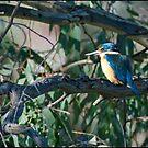 The Sacred Kingfisher by Anna Ryan