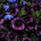 Purple with a Touch of Blue by Sandra Fortier