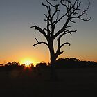 Stunning Tree at Sunset by Glenn  Cramsie