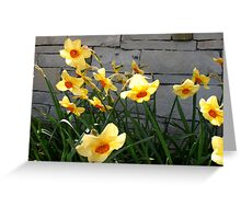 Giggling Narcissis Greeting Card