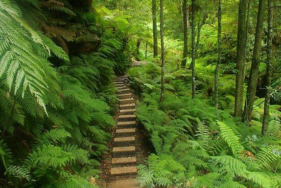Pathway of ferns by Michael Matthews
