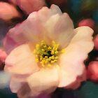 Cherryblossoms 01 by Karen  Securius