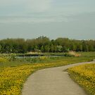 Buttercups trail by steppeland