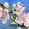 Peach Blossoms by Marsha Elliott