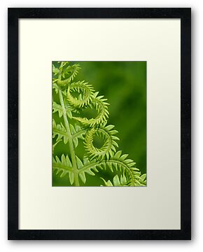 Fern Leaf Detail by Tracy Faught