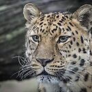 The Beautiful Amur by Mark Hughes