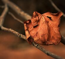 Red Leaf by conformebelle