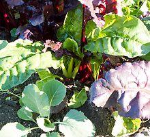 leafy vegetables by Anne Scantlebury