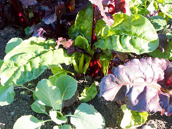 leafy vegetables by Anne Scantlebury
