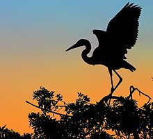 The Great Blue Heron - Dusk by T.J. Martin
