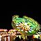 Carnival Rides and Lights (NO FERRIS WHEELS)