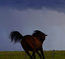 """Storm colt"" for iphone by Penny Kittel"