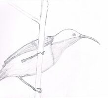 Sun Bird drawing by cathywillett