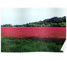 Red Clover Fields  Poster
