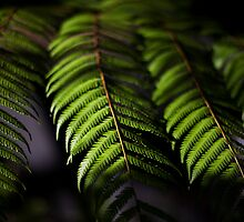 Foliage, 3 by tenzil