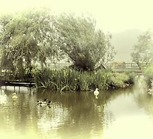 The Duck Pond by Catherine Hamilton-Veal  ©
