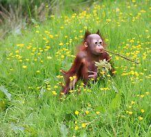 Orang Baby by Jo Nijenhuis