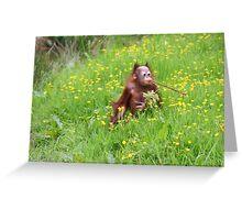 Orang Baby Greeting Card