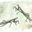Sphodromantis viridis (Praying Mantis) by Maree Clarkson