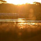 Lake Sunset  by David Wanden