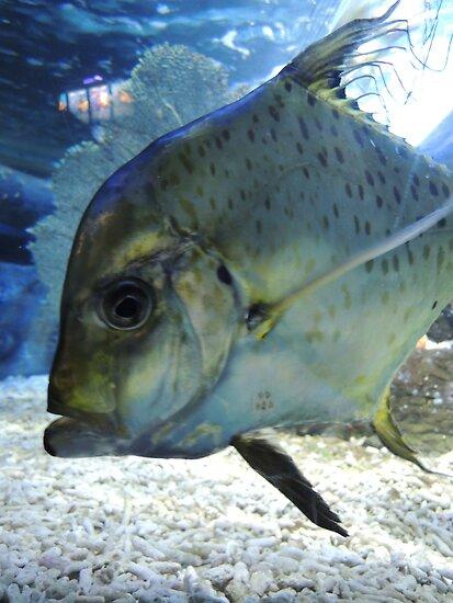 Friendly Fish by CreativeEm