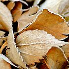 Frosty Autumn Leaves by Alison Hill