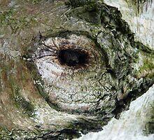 The eye by Photos - Pauline Wherrell