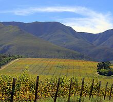 Autumn vineyards by Antionette
