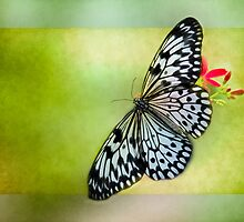 Butterfly Squared by Rebecca Cozart