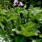 Purple Bells by luckycatphotos