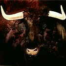 Bull head by lillo