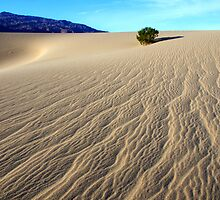 Death Valley Written By The Wind by Bob Christopher