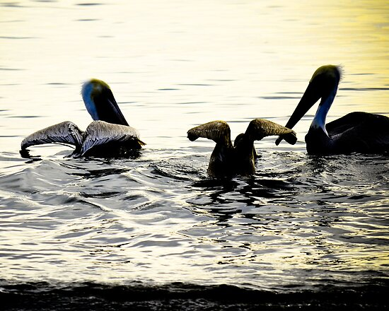 Pelican Swim by HanieBCreations