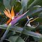 Bird of Paradise by PhotoJoJo