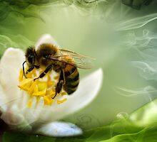 Bee at work by photojunk