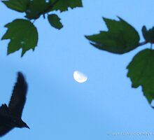 Blue, Moon and the Crow by David Denny