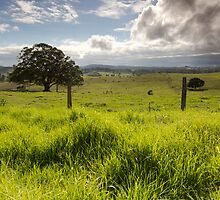Greener Pastures by Shelley Warbrooke