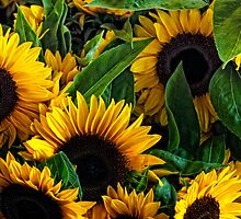 Pike Place Sunflowers by Dana Horne