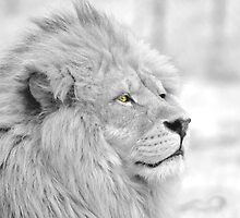 Lion by neil harrison