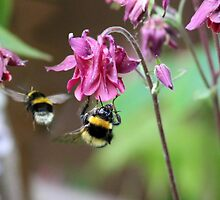 Busy Little Bees by missmoneypenny