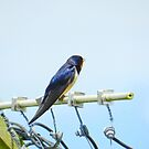 Bird on the wire! by weecritter