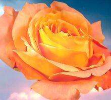 Rose For Every Sky by daphsam
