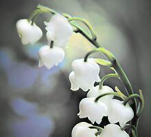 Lily of the Valley by missmoneypenny