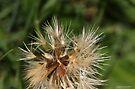 macro flora 030 by Karl David Hill