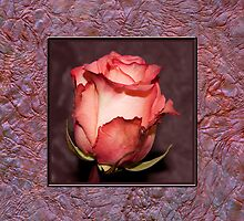 Rose With Handmade Frame  by Sandra Foster